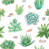 Teste padrão sem emenda da aquarela com composições das plantas carnudas, flores ilustração royalty free
