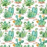 Teste padrão sem emenda da aquarela com composições das plantas carnudas, flores ilustração stock