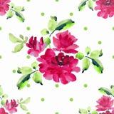 Teste padrão sem emenda da aquarela com os ramalhetes de rosas cor-de-rosa e da polca verde no fundo branco Fotografia de Stock Royalty Free