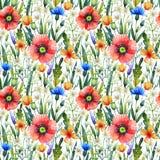 Teste padrão sem emenda da aquarela com papoilas Fundo floral Flores tiradas mão do verão imagem de stock