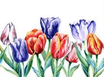 Teste padrão sem emenda da aquarela com tulipas Fotografia de Stock