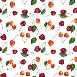 Teste padrão sem emenda da aquarela das bagas da cereja do verão Cerejas da aquarela isoladas no fundo branco Para o projeto, mat ilustração do vetor