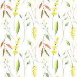 Teste padrão sem emenda da aquarela do outono Folhas, branchs e flores Imagens de Stock Royalty Free