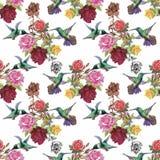 Teste padrão sem emenda da aquarela floral tropical com colibris e flores Pintura da aguarela Fotografia de Stock