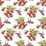 Teste padrão sem emenda da aquarela floral tropical com colibris e flores Pintura da aguarela Fotografia de Stock Royalty Free