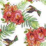 Teste padrão sem emenda da aquarela floral tropical com colibris e flores Pintura da aguarela Imagens de Stock Royalty Free