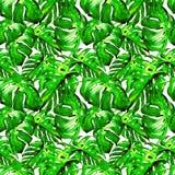 Teste padrão sem emenda da aquarela Ilustração pintado à mão das folhas e de flores tropicais Motivo tropico do verão com Liana P imagens de stock