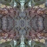 Teste padrão sem emenda da casca velha do álamo cinzento A textura da casca fotografia de stock