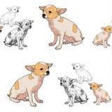 Teste padrão sem emenda da chihuahua adorável ilustração stock