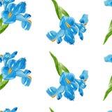 Teste padrão sem emenda da flor da íris da aquarela Imagens de Stock Royalty Free