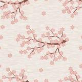 Teste padrão sem emenda da flor de cereja Imagem de Stock Royalty Free