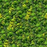Teste padrão sem emenda da floresta - vista de acima. Foto de Stock