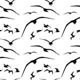 Teste padrão sem emenda da gaivota Vetor Imagens de Stock Royalty Free