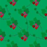 Teste padrão sem emenda da groselha floral do vetor Ilustração Stock