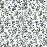 Teste padrão sem emenda da planta do mirtilo da aquarela no fundo branco Teste padrão rústico tirado mão para a tela, fundamento ilustração do vetor