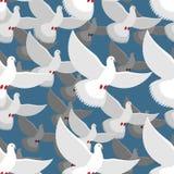 Teste padrão sem emenda da pomba do branco rebanho das pombas brancas no céu azul T Fotografia de Stock Royalty Free