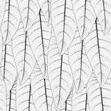 Teste padrão sem emenda da repetição tropical longa das folhas Fotos de Stock