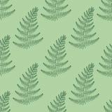 Teste padrão sem emenda da samambaia do vetor de Zentangle Grama tribal decorativa Imagens de Stock