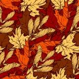 Teste padrão sem emenda das folhas de bordo do outono Fotos de Stock Royalty Free