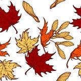 Teste padrão sem emenda das folhas de bordo e das sementes do outono Fotos de Stock