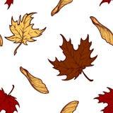 Teste padrão sem emenda das folhas de bordo e das sementes do outono Foto de Stock Royalty Free