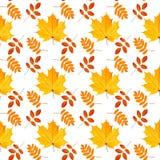 Teste padrão sem emenda das folhas de outono fotos de stock royalty free