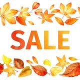Teste padrão sem emenda das folhas de outono Aquarela da venda do outono Duas pistas Imagem de Stock