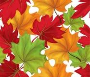 Teste padrão sem emenda das folhas de outono do esboço do vetor Foto de Stock