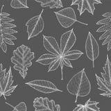 Teste padrão sem emenda das folhas de outono Ilustração botânica Fotos de Stock