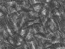 Teste padrão sem emenda das folhas de palmeira Foto de Stock Royalty Free