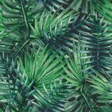 Teste padrão sem emenda das folhas de palmeira tropicais da aquarela Fotografia de Stock Royalty Free