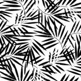 Teste padrão sem emenda das folhas de palmeira tropicais Ilustração do vetor ilustração royalty free