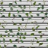 Teste padrão sem emenda das folhas e de ramos verdes do tradiskantsaniya das flores em um fundo listrado Vetor ilustração stock