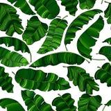 Teste padrão sem emenda das folhas exóticas, verdes da banana, aleatoriamente dispersadas e isoladas em um fundo transparente ilustração do vetor