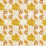Teste padrão sem emenda das folhas naturais do outono fotografia de stock
