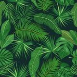 Teste padrão sem emenda das folhas tropicais da palmeira Imagem de Stock Royalty Free