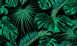 Teste padrão sem emenda das folhas tropicais do vetor Foto de Stock