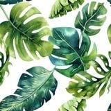 Teste padrão sem emenda das folhas tropicais, selva densa da aquarela Ha ilustração stock