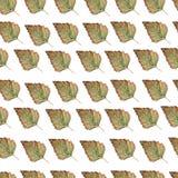 Teste padrão sem emenda das folhas verdes da árvore de vidoeiro, ramos naturais, ervas coloridas, mão tirada na aquarela Fundo el ilustração royalty free