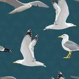 Teste padrão sem emenda das gaivota de mar Pairando, subir, estando, com asas dobradas, o descanso, curioso Voar mew ilustração stock
