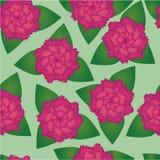 Teste padrão sem emenda de flores cor-de-rosa Imagens de Stock Royalty Free