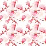 Teste padrão sem emenda de flores da magnólia Fotografia de Stock Royalty Free