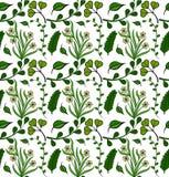Teste padrão sem emenda de plantas verdes Fotografia de Stock