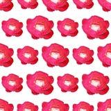 Teste padrão sem emenda de Rosa isolado no fundo branco Fotos de Stock