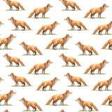 Teste padrão sem emenda de uma raposa Fotos de Stock Royalty Free