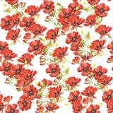 Teste padrão sem emenda delicado com papoilas e camomilas watercolor Fotografia de Stock