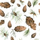Teste padrão sem emenda desenhado à mão com cones do pinho e ramos da árvore sempre-verde conífera Fotos de Stock