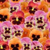Teste padrão sem emenda do amor perfeito das violetas Fotografia de Stock Royalty Free