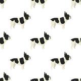 Teste padrão sem emenda do buldogue francês da coleção do cão Foto de Stock