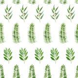 Teste padrão sem emenda do eucalipto, da samambaia e da baía da aquarela no fundo branco ilustração do vetor